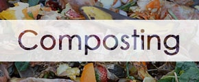 the caption, composting, with a background image of things that can compost
